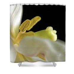 Dreams Shower Curtain by Elsa Marie Santoro