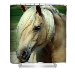Dreams Of Honey Shower Curtain by Karen Wiles