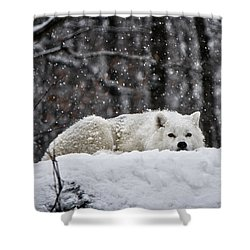 Dreams Of Warmer Weather Shower Curtain by Heather King