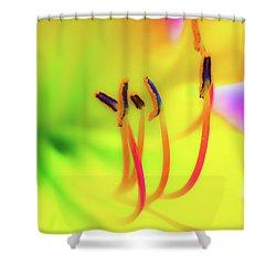 Dreamy Daylily Shower Curtain