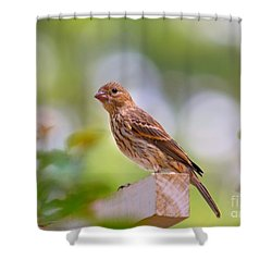 Shower Curtain featuring the photograph Dreamy Finch by Lisa L Silva