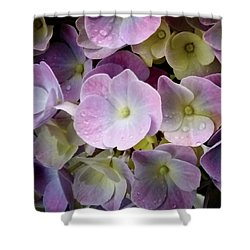 Shower Curtain featuring the photograph Dreamy Hydrangea by Mimulux patricia no No