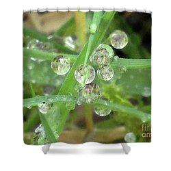 Dreamy Morning #5 Shower Curtain by Kim Tran