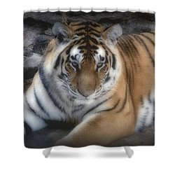Dreamy Tiger Shower Curtain by Sandy Keeton