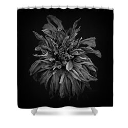 Dried Dahlia 2 Shower Curtain by Simone Ochrym