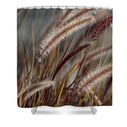 Dried Desert Grass Plumes In Honey Brown Shower Curtain