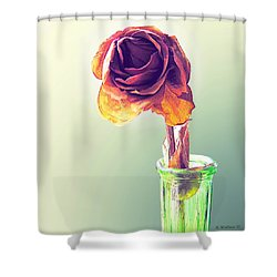 Dried Rose Shower Curtain by Brian Wallace