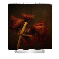Dried Tulip Blossom 2 Shower Curtain