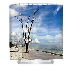 Shower Curtain featuring the photograph Driftwood At Lovers Key State Park by Janet King