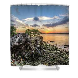 Shower Curtain featuring the photograph Driftwood At The Edge by Debra and Dave Vanderlaan