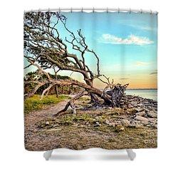 Driftwood Beach Morning 2 Shower Curtain