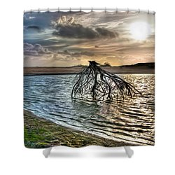 Driftwood In A Tide Pool Outer Banks Ap Shower Curtain