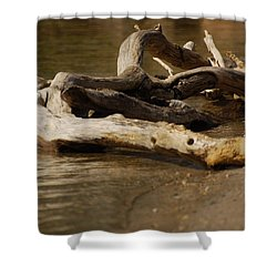 Shower Curtain featuring the photograph Driftwood by Ramona Whiteaker