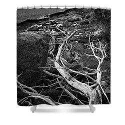 Driftwood Tree, La Verna Preserve, Bristol, Maine  -20999-30003 Shower Curtain