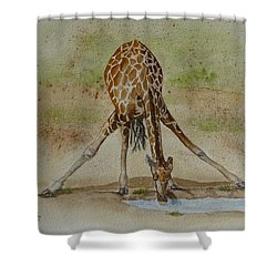 Drinking Giraffe Shower Curtain by Kelly Mills