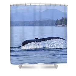 Dripping Whale Fluke Shower Curtain by Michele Cornelius