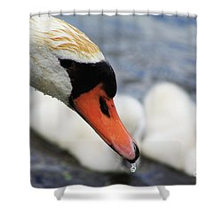 Drippy Nose Shower Curtain by Alyce Taylor