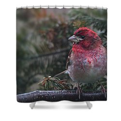 Drizzled Finch Shower Curtain