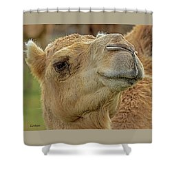Dromedary Or Arabian Camel Shower Curtain