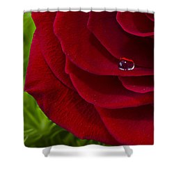 Drop On A Rose Shower Curtain by Marlo Horne