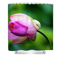 Shower Curtain featuring the photograph Droplets On Lotus by Edward Kreis