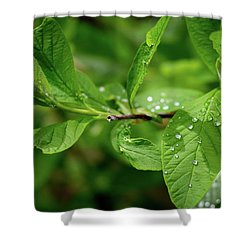 Droplets On Spring Leaves Shower Curtain