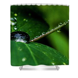 Shower Curtain featuring the photograph Droplets On Stem And Leaves by Darcy Michaelchuk