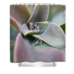 Droplets On Succulent Shower Curtain