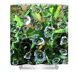 Drops Of Reflection Shower Curtain