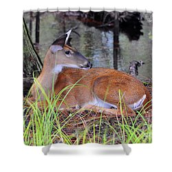 Shower Curtain featuring the photograph Drowsy Deer by Al Powell Photography USA