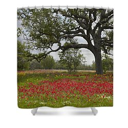 Shower Curtain featuring the photograph Drummonds Phlox Meadow Near Leming Texas by Tim Fitzharris
