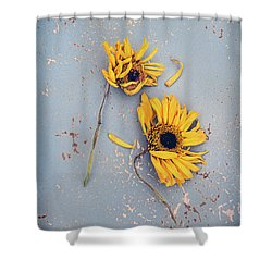 Shower Curtain featuring the photograph Dry Sunflowers On Blue by Jill Battaglia