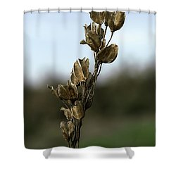 Drying Flower Shower Curtain by Shlomo Zangilevitch