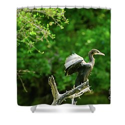 Drying Indian Cormorant Shower Curtain