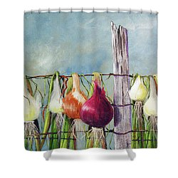 Drying Onions Shower Curtain