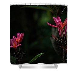 Dual Red Plumerias Shower Curtain