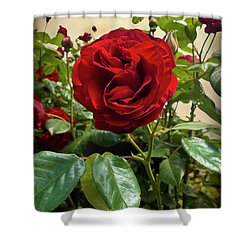Dublin Bay Climbing Rose Shower Curtain