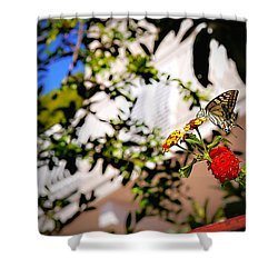 Dubrovniks Butterfly Shower Curtain