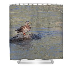 Duck Alone On The Rock Shower Curtain