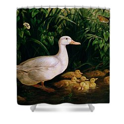 Duck And Ducklings Shower Curtain by English School