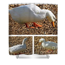 Shower Curtain featuring the mixed media Duck Collage Mixed Media A51517 by Mas Art Studio