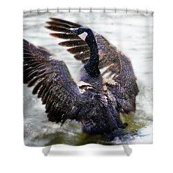 Duck Conductor Shower Curtain