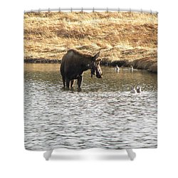 Ducks - Moose Rollinsville Co Shower Curtain