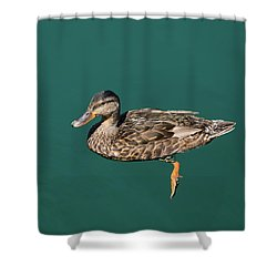 Shower Curtain featuring the photograph Duck Floats by Davor Zerjav