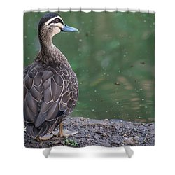 Duck Look Shower Curtain