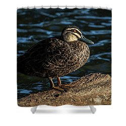 Duck On A Log Shower Curtain