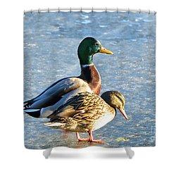Duck Pair On Frozen Lake Shower Curtain