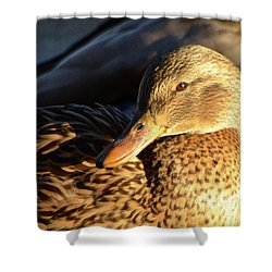 Duck Sunbathing Shower Curtain