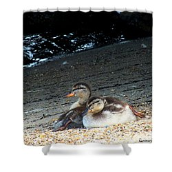 Ducklings On The Beach Shower Curtain