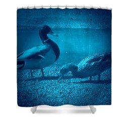 Ducks #2 Shower Curtain
